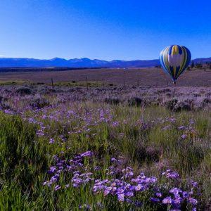 Balloon Rides over Colorado Wildflowers